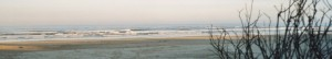 cropped-beachside-sunrise-2006.jpg